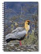 Black-faced Ibis Spiral Notebook