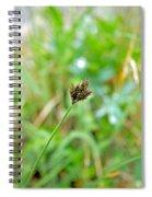 Black Grass Spiral Notebook