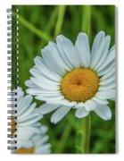 Black-headed Daisy's Spiral Notebook