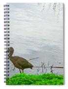 Black Ibus Spiral Notebook