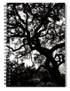 Black Jack Oak Spiral Notebook