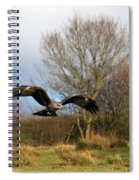 Black Kite Spiral Notebook