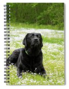 Black Lab Laying In A Field Spiral Notebook