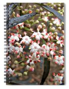 Black Lace Elderberry With Raindrops Spiral Notebook
