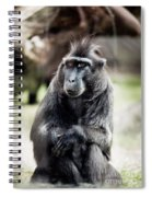 Black Macaque Monkey Sitting Spiral Notebook