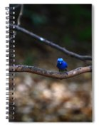 Black-napped Monarch Spiral Notebook