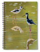 Black Necked Stilts  Spiral Notebook