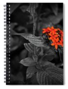 Black-orange Butterfly Spiral Notebook