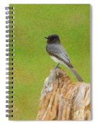 Black Phoebe Spiral Notebook