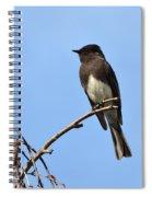 Black Phoebe 2 Spiral Notebook