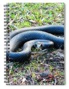 Black Racer Spiral Notebook