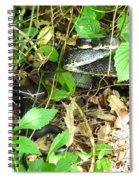 Black Rat Snake Spiral Notebook