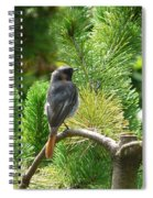 Black Redstart Spiral Notebook