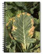 Black Rot On Collards Spiral Notebook