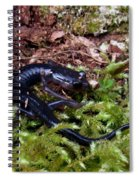 Black Salamander Spiral Notebook