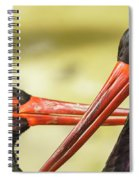 Black Storks Jerez De La Frontera Spain Spiral Notebook
