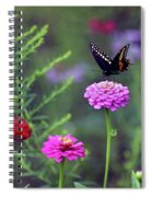 Black Swallowtail Butterfly In August  Spiral Notebook