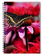 Black Swallowtail Butterfly On Coneflower Square Spiral Notebook
