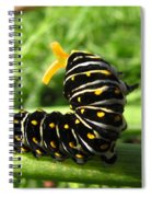 Black Swallowtail Caterpillar Spiral Notebook