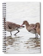 Black-tailed Godwits Spiral Notebook