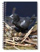 Black Tern On Nest Spiral Notebook