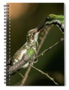 Black-throated Mango With Her Baby Hummingbird. Spiral Notebook