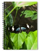 Black Tropical Butterfly Spiral Notebook