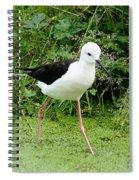 Black-winged Stilt Spiral Notebook