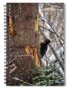 Black Woodpecker Peek Spiral Notebook