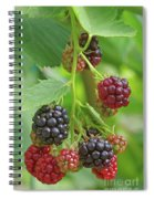 Blackberry Spiral Notebook