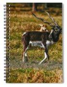 Blackbuck Spiral Notebook
