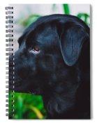 Blackiecharlie IIi Spiral Notebook