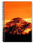 Blazing Oak Tree Spiral Notebook