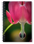 Bleeding Heart Macro Spiral Notebook