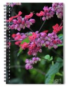 Bleeding Heart Vine Spiral Notebook