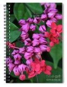 Bleeding Heart Vine Macro Spiral Notebook