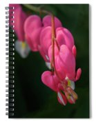 Bleeding Hearts Flowers Spiral Notebook