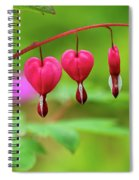 Bleeding Hearts - Lamprocapnos-spectabilis Spiral Notebook