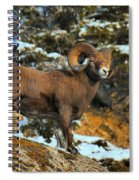 Blending In In Jasper Spiral Notebook