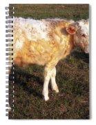 Blond Calf Spiral Notebook