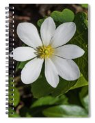 Blood Root Or Blood Wort Spiral Notebook