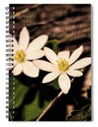 Bloodroot In Spring Spiral Notebook