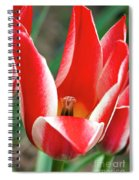 Bloom Of The Tulip Spiral Notebook