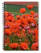 Bloom Red Poppy Field Spiral Notebook