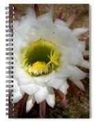 Blooming Hedgehog Cactus Spiral Notebook