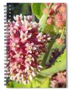 Blooming Milkweed Flowers Spiral Notebook
