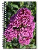 Blooming Pink Phlox Flowers In A Spring Garden Spiral Notebook