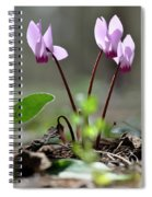 Blossom Of Cyclamens Spiral Notebook
