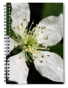 Blossom Square Spiral Notebook