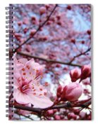 Blossoms Art Blue Sky Spring Tree Blossoms Pink Giclee Baslee Troutman Spiral Notebook